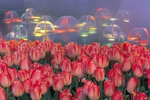 韩国的春天
