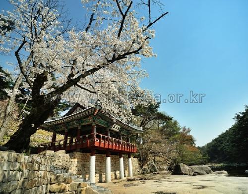 25处韩国的春季风景