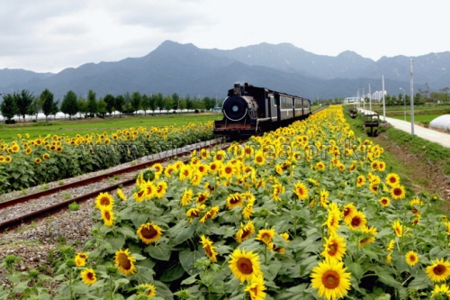 Korea's Summer Scenery
