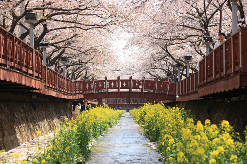 韩国的春花庆典