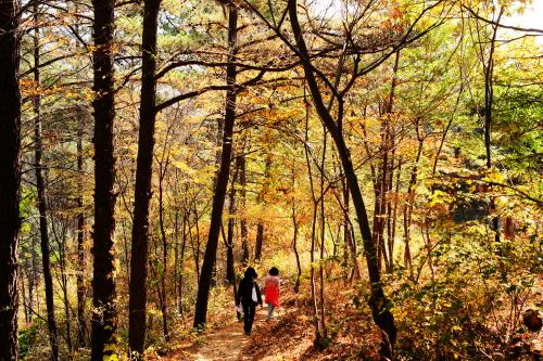 智异山环山路上的秋天