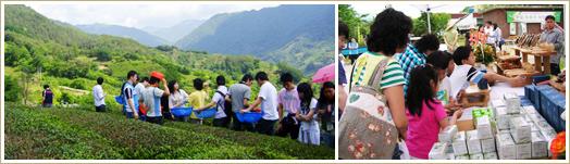 河东野生茶文化庆典