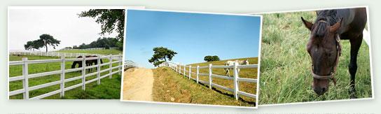 异国风景,幽静的散步小路,还可以看到绿油油的牧场上闲静地吃着草的马