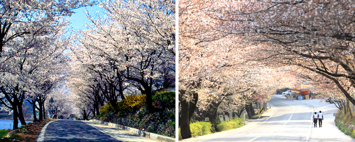 美丽的春天来了