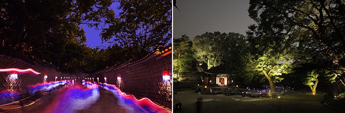 河心岛森林河公园花灯