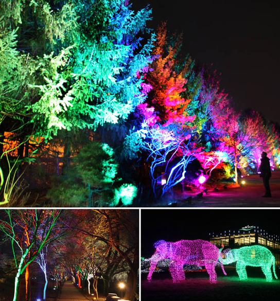 200万盏的led灯装饰着树木,并且形塑出鹿,蝴蝶,大象的梦幻灯饰.