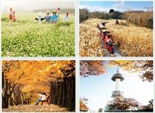 四季風情遊