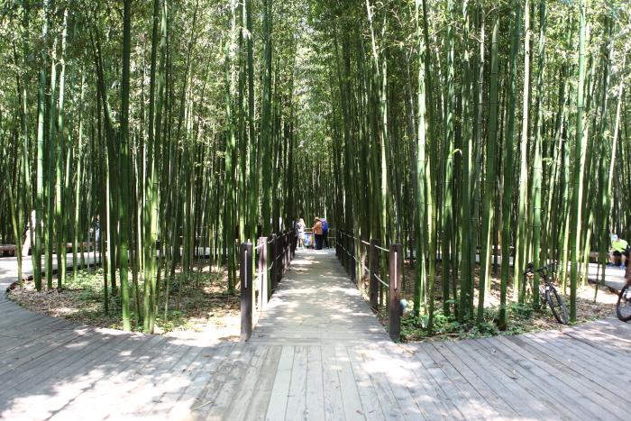 태화강 십리대숲 죽림욕장