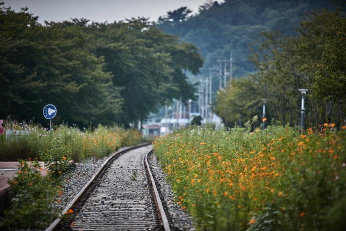 Дорога вишнёвых деревьев на станции Кёнхва (경화역 벚꽃길)16