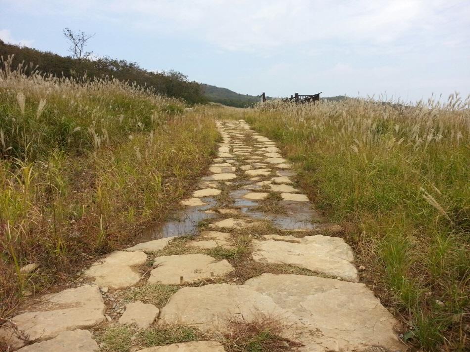 물이 습지로 잘 흘러들게 메워 복원한 모습 _사진 제공 낙동강유역환경청