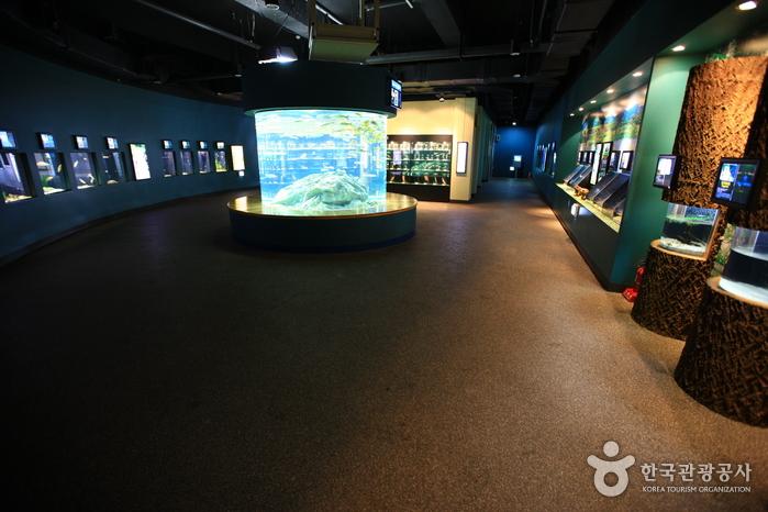 민물고기생태체험관 사진18