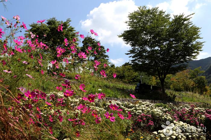 가을꽃이 만발한 야생화 정원