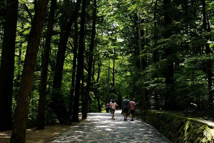 [월정사 전나무 숲길] 천년의 세월을 지켜온 신령한 숲길 2