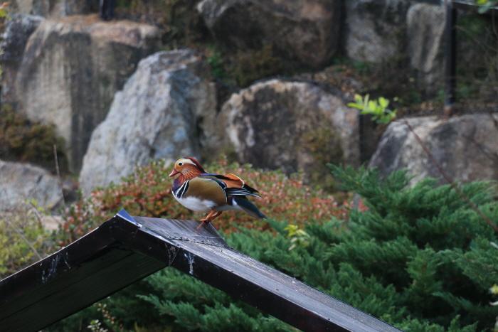 네이처파크 낭만동물원 2019