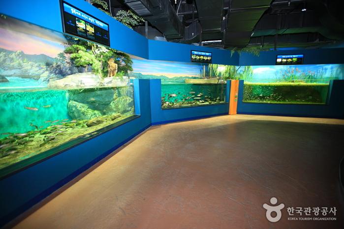 민물고기생태체험관 사진13