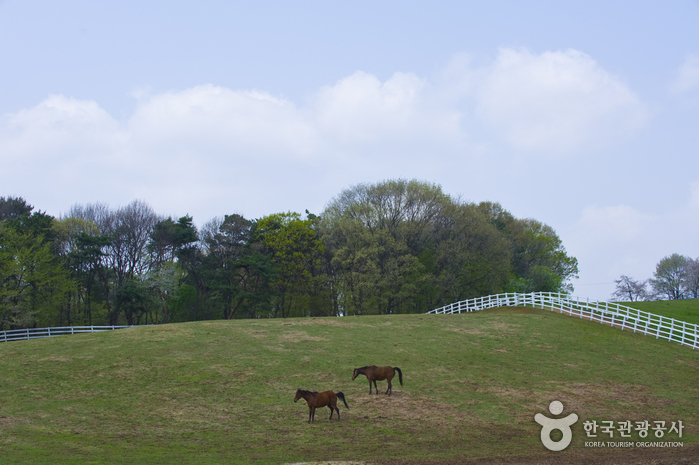 Wondang Horse Ranch (Let's Run Farm) (원당종마목장 (렛츠런팜 원당))