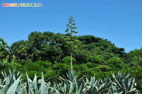 Parc Hallim (한림공원)