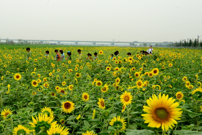 Daejeo Ecological Park (대저생태공원)