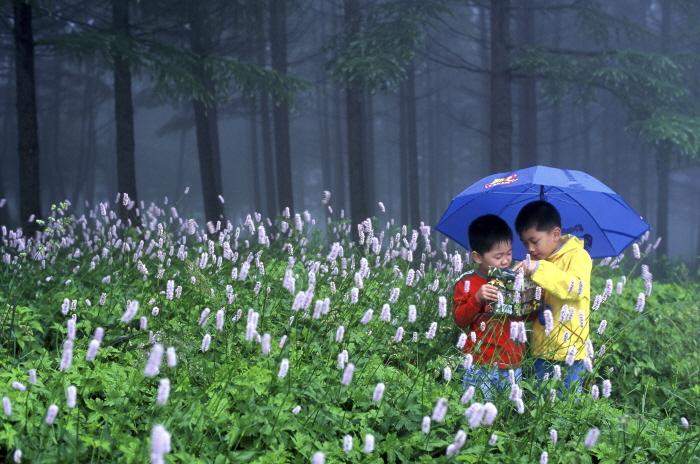 이른 아침 안개 자욱한 천상의 화원에서 꽃구경에 신난 아이들