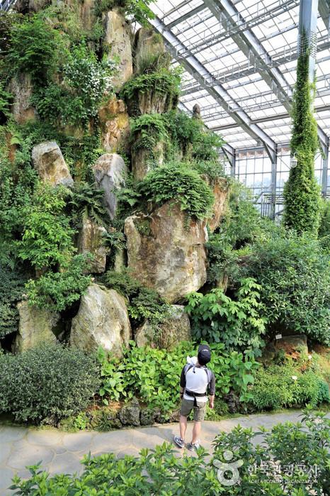 온실내부 - 바위 위 식물