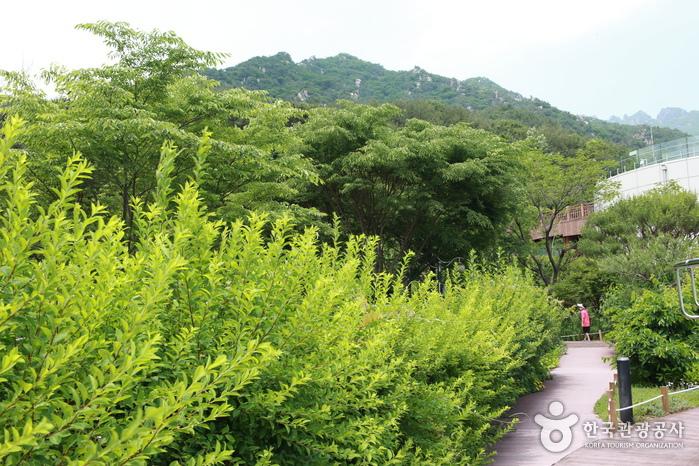가야산 야생화식물원