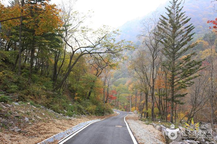 Dutasan Recreational Forest  (국립 두타산자연휴양림)
