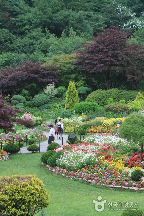 Korean Peninsula Wild Flower Exhibition of The Garden of Morning Calm (아침고요 한반도 야생화전)