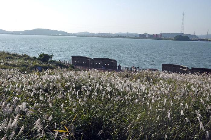 금강습지생태공원