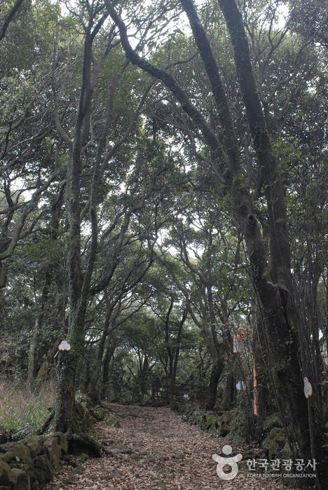 Jeju Olle Trail - Route 15 (Hallim - Gonae Olle) (제주올레 15코스 (한림-고내 올레))