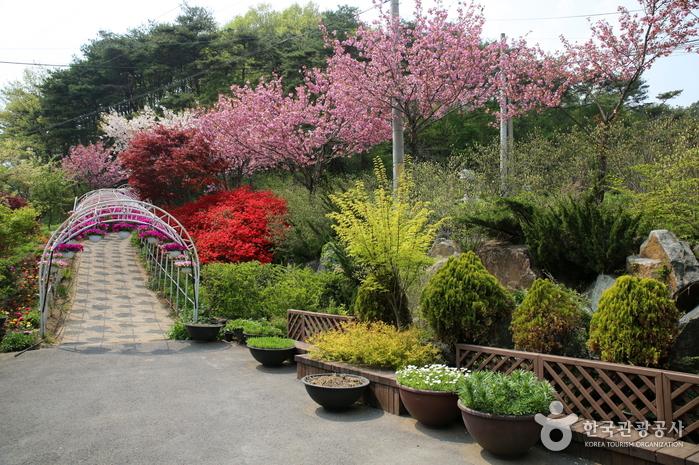 Kohwun植物園(고운식물원)