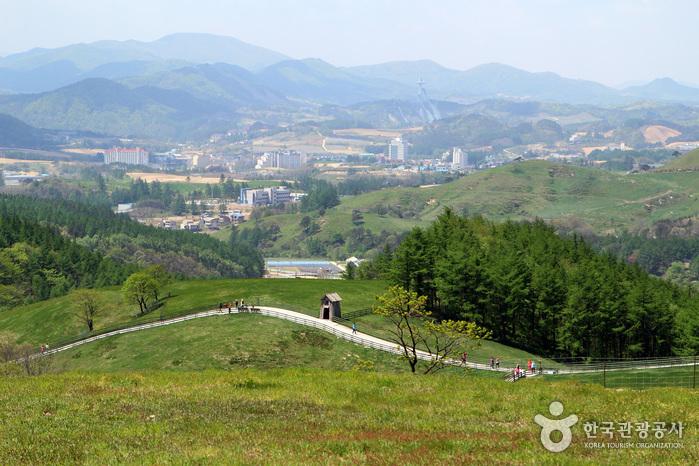 강원 평창군 사진3