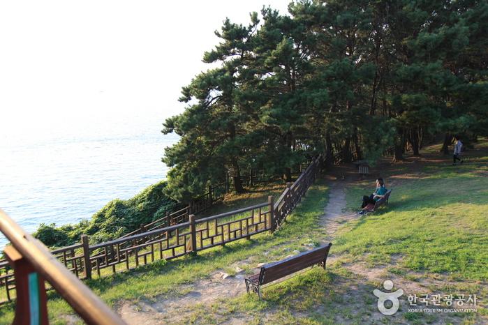 舒川 馬梁里ツバキの森(서천 마량리 동백나무 숲)
