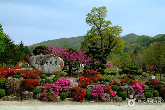 Daea Arboretum (대아수목...