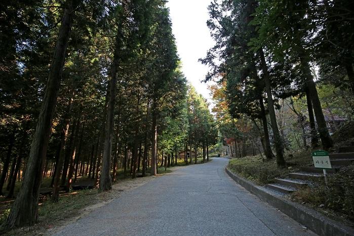 울창한 편백나무숲으로 떠나는 힐링 여행