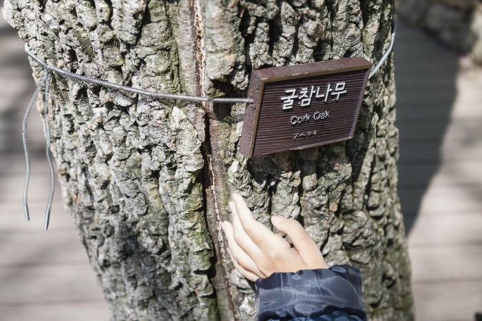 코르크 마개 같은 굴참나무 표피