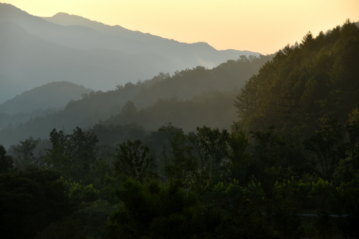 국립백두대간수목원  사진8
