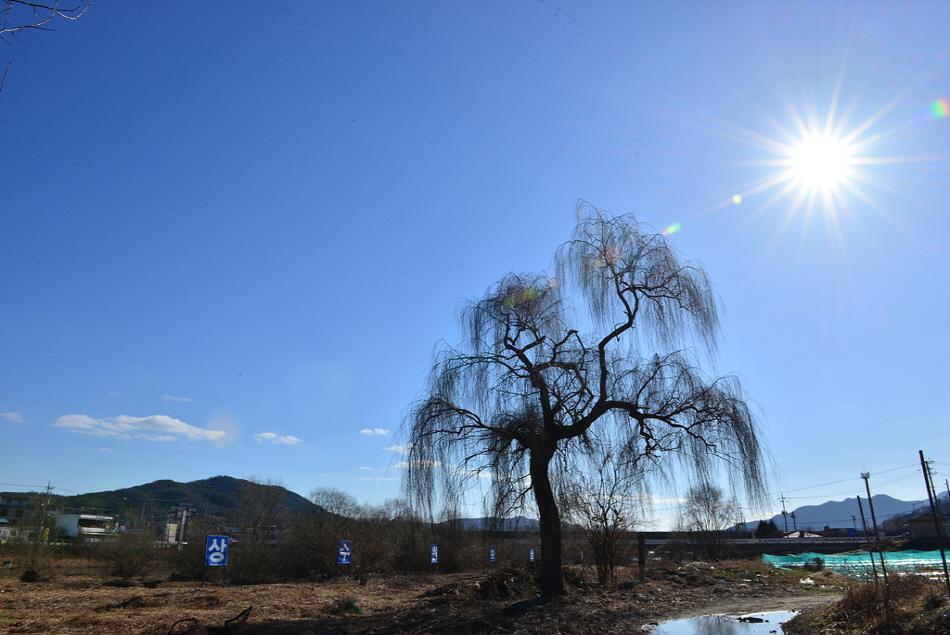 큰 버드나무가 있다.
