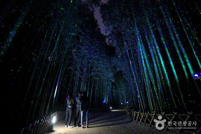 태화강 국가정원 십리대숲 (은하수길)