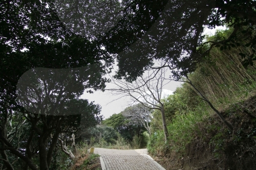 Ulleung Daepunggam Aromatic Tree Inhabitants (울릉 대풍감 향나무 자생지)