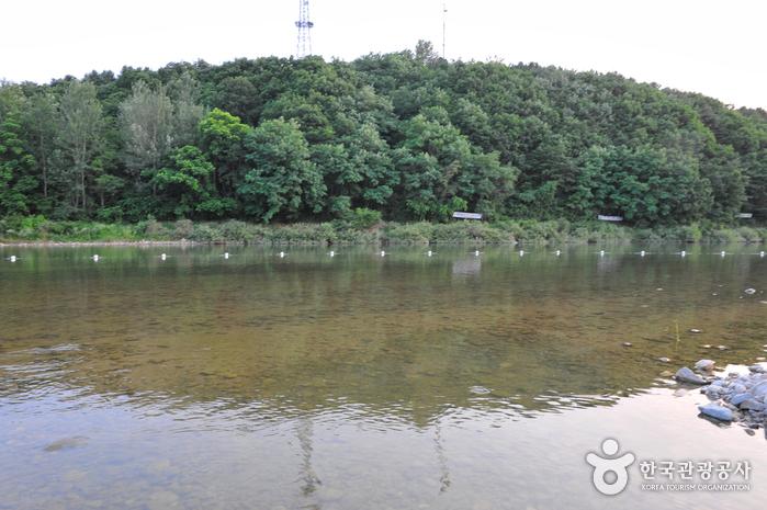 대진교강변 마을관리휴양지