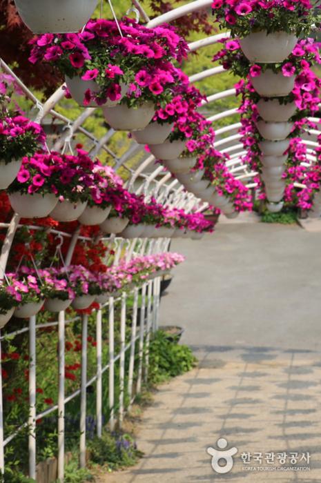 나팔꽃 화분이 매달린 터널