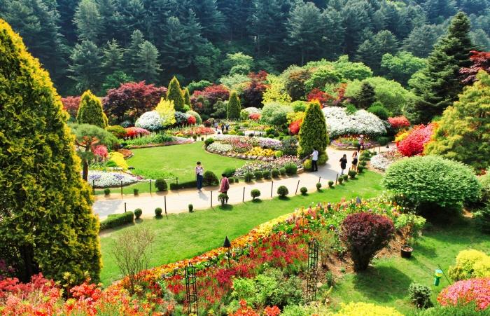 Frühlingsfestival im Arboretum Achim Goyo (아침고요수목원 봄나들이 봄꽃축제)