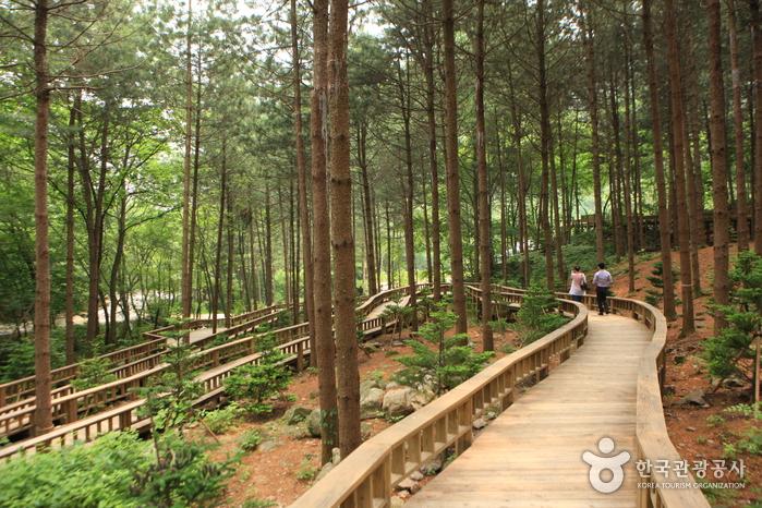 Saneum National Recreational Forest (국립 산음자연휴양림)