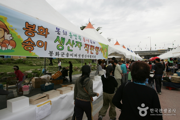 奉化マツタケ祭り(봉화송이축제)