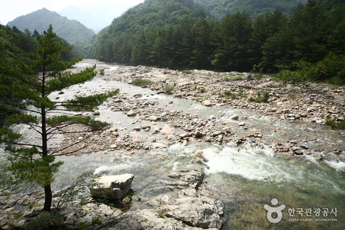 Baekdam Valley (백담계곡)
