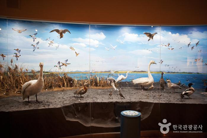 Geumgang Migratory Bird Observatory (금강철새조망대)