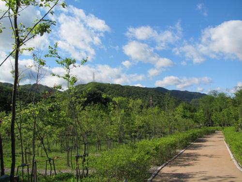 가평삼회 생태복원지구 사진9