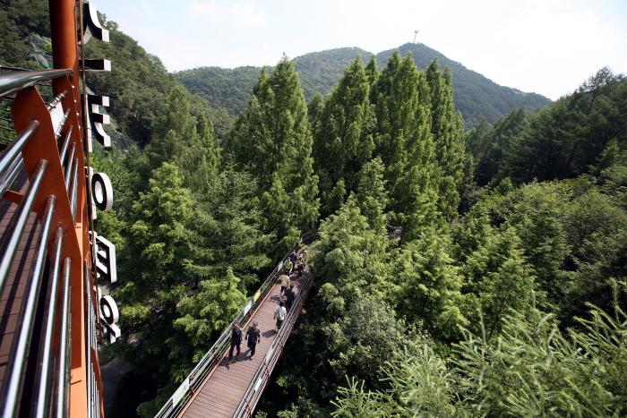 메타세쿼이아 숲에서 휴식, 대전 장태산자연휴양림 사진
