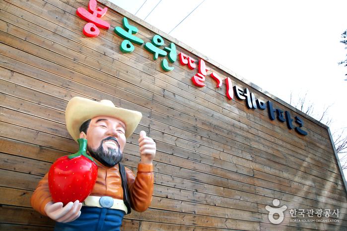 30년 노력으로 일으킨 딸기농장