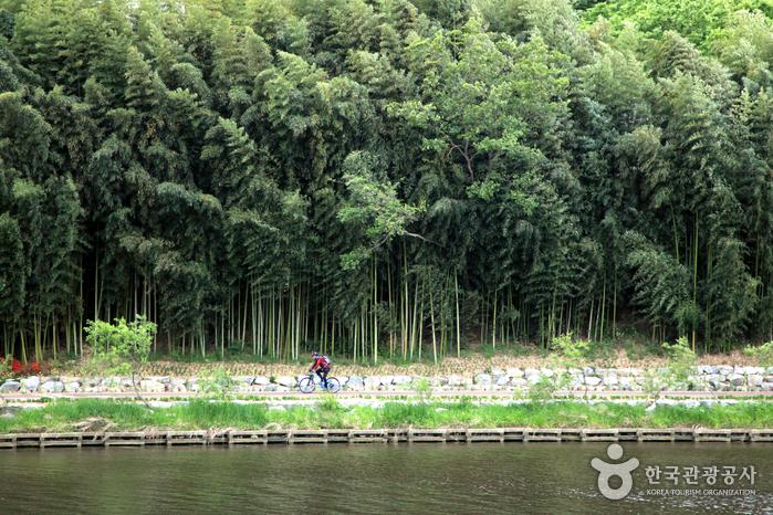 십리대숲 은하수길